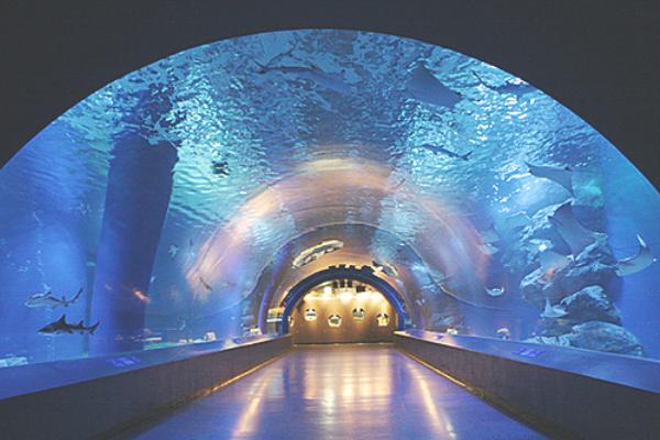 アクアパーク品川水槽トンネル